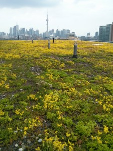 The green roof is now the yellow roof!